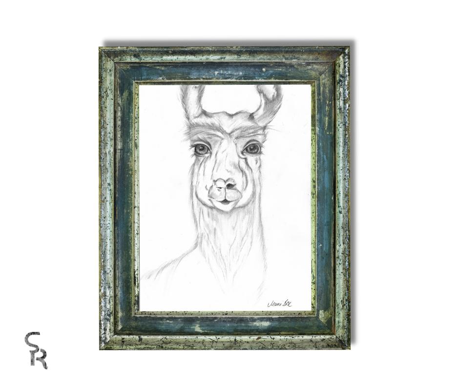 Duchess Zeichnung